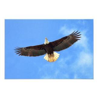 Eagle Flying Art Photo