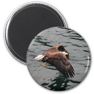 Eagle flying with wings out fridge magnets