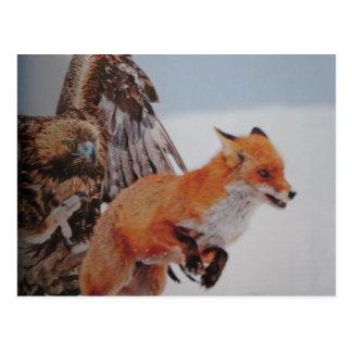 Eagle fox combat postcard