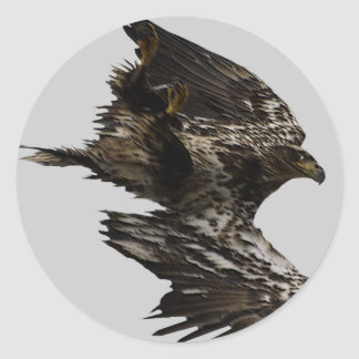 Eagle Gifts Classic Round Sticker