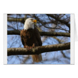 eagle greeting cards