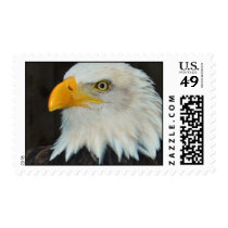 Eagle Head Postage Stamp