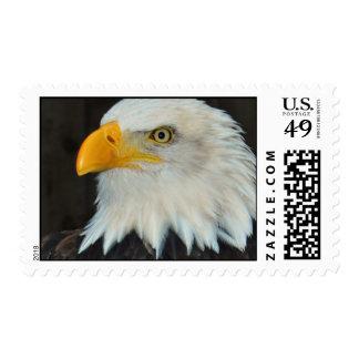 Eagle Head Postage Stamp