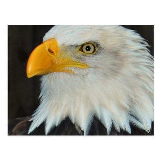 Eagle Head Postcard