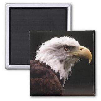 Eagle Head Study 2 Inch Square Magnet