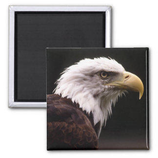 Eagle Head Study Refrigerator Magnet