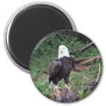 Eagle Imán De Frigorífico