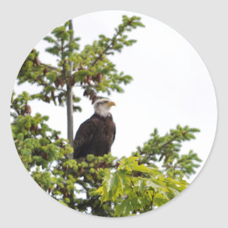 Eagle in a Tree Classic Round Sticker