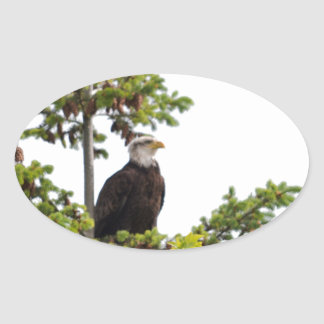 Eagle in a Tree Oval Sticker