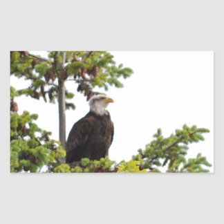 Eagle in a Tree Rectangular Sticker