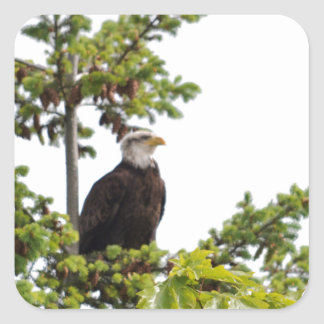 Eagle in a Tree Square Sticker