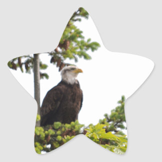 Eagle in a Tree Star Sticker