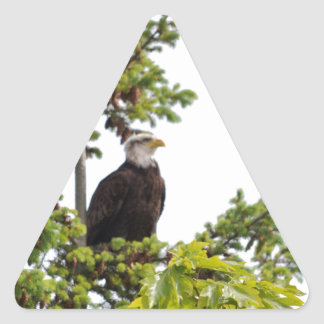 Eagle in a Tree Triangle Sticker