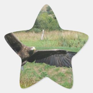 Eagle_In_Flight_2004-09-01 Pegatina En Forma De Estrella