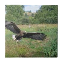Eagle_In_Flight_2004-09-01 Tile
