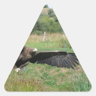 Eagle_In_Flight_2004-09-01 Triangle Sticker