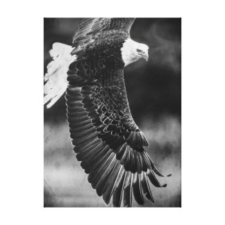 Eagle in flight black and white canvas print