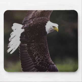 Eagle in flight mouse pads