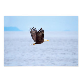 Eagle in Flight Photographic Print