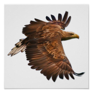 Eagle in Flight Wall Poster