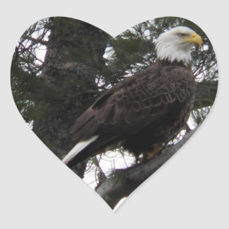 Eagle in the pines heart sticker