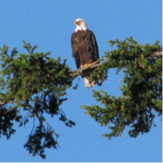 Eagle In Tree Statuette