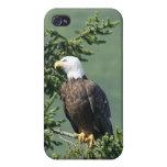 Eagle iPhone 4 Cobertura