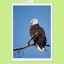 Eagle keeping watch. card