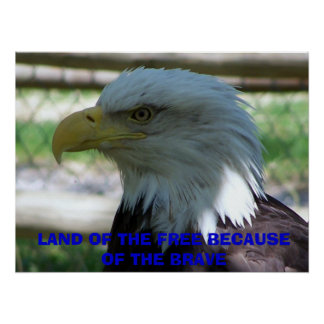 Eagle, LAND OF THE FREE BECAUSE OF THE BRAVE Poster