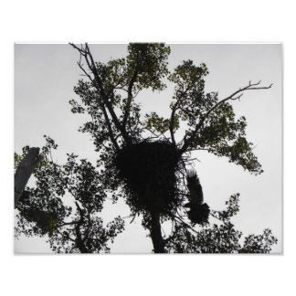 Eagle Landing Photo Print