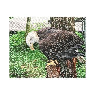 eagle looking down off perch sketch canvas prints