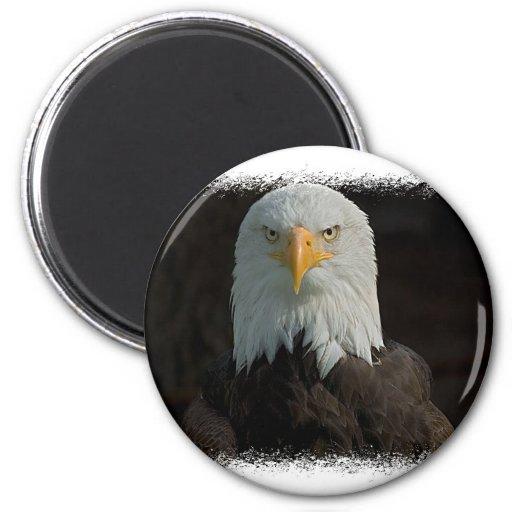 Eagle Magnet Magnet