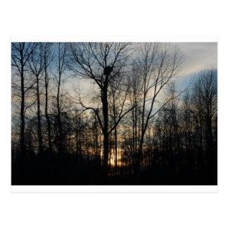 Eagle Nest Sunset Postcard