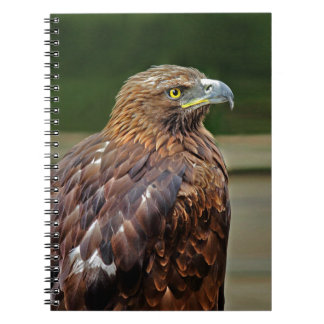 Eagle notes spiral notebook