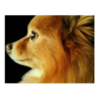 Eagle observó Pomeranian Postal