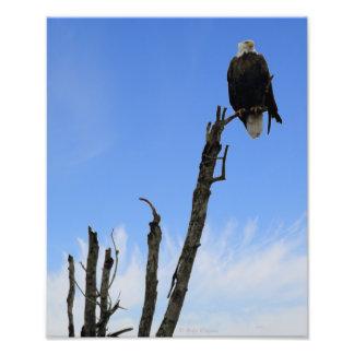 Eagle on a tree photo print