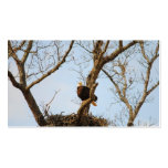 Eagle on Branch Business Cards