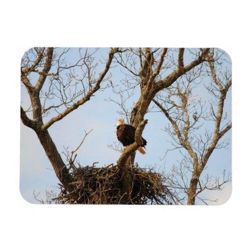 Eagle on Branch Rectangle Magnet