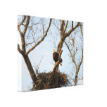 Eagle on Branch Stretched Canvas Print