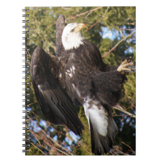 Eagle One Spiral Note Books