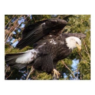 Eagle One Postcard