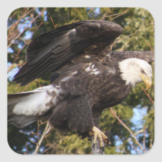 Eagle One Square Sticker