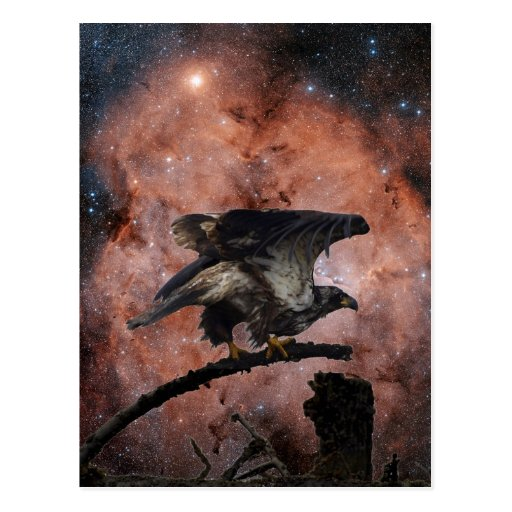 Eagle outer space gifts postcard zazzle for Outer space gifts