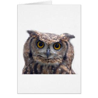 EAGLE OWL (Bubo Bubo) Card