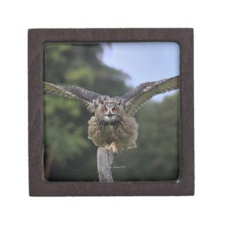 Eagle Owl (Bubo bubo) Keepsake Box