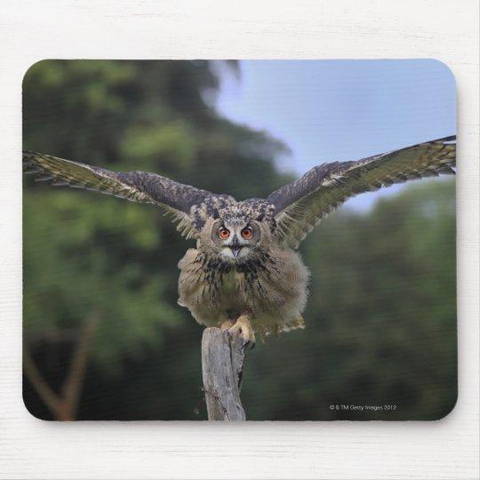 Eagle Owl (Bubo bubo) Mouse Pad