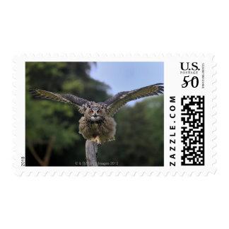 Eagle Owl (Bubo bubo) Postage
