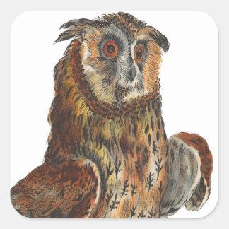 Eagle-Owl - Bubo bubo Square Sticker