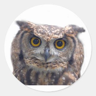 EAGLE OWL (Bubo Bubo) Stickers