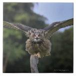 Eagle Owl (Bubo bubo) Tile